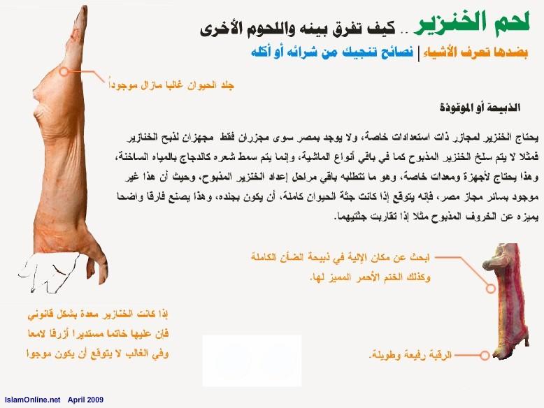 الخنزير maas-41ad877aac.jpg
