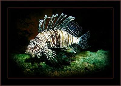 أسماك غريبة الشكل