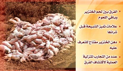 الخنزير maas-879d981388.jpg